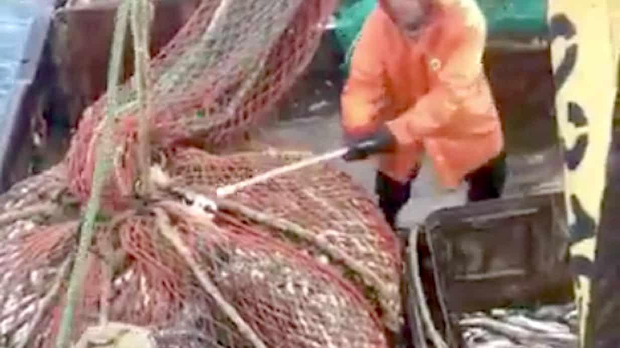 Spektakulart_2016_Surprise_for_fishermen_Fisk_in_the_net