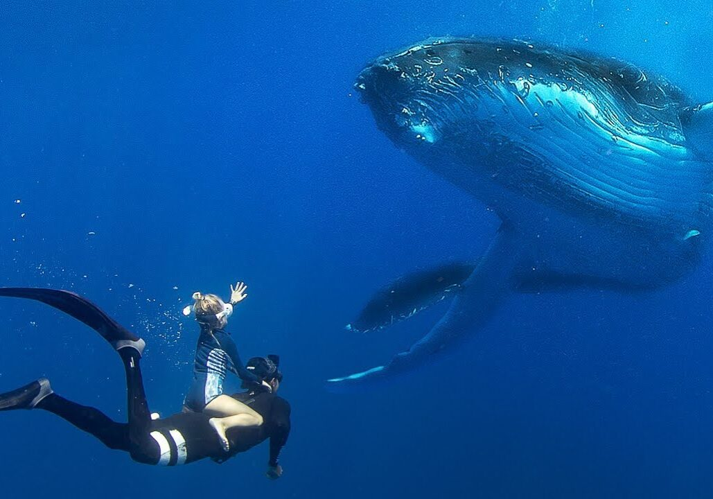 Small kids swimming with big whales