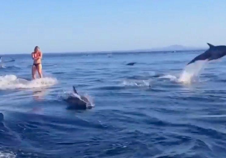 Spektakulart_2014_Delfinwakeboarding_Delfin