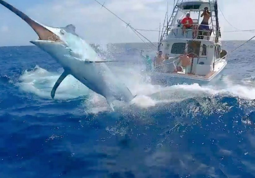 Spektakulart_2018_SportfiskeExtrem_Ingang_Extreme_fishing_captured_by_drone
