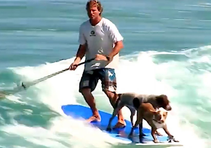 Vattensport_2018_Hundsurfing_Ingang_SurfaMedHundIngang